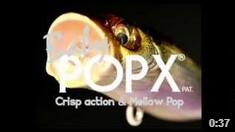 BABY POPX
